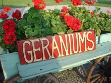 Geraniums...steady color if you deadhead them, buy hanging baskets with three plants and plant them in pots for the patio.