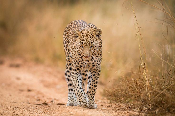 Sør-Afrika med safari og Dubai - OrkideEkspressen