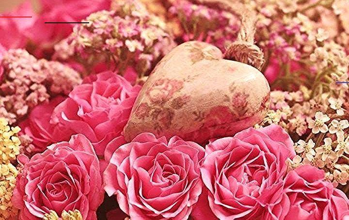 Wallpaper Bunga Mawar Love 59 Kumpulan Aneka Gambar Bunga Mawar Dan Jenisnya T 3dwall 3d Rose