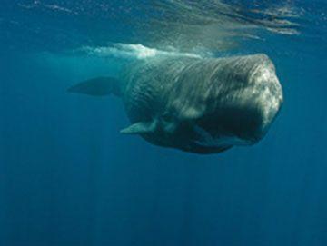 #Dolphin #Watching #SriLanka