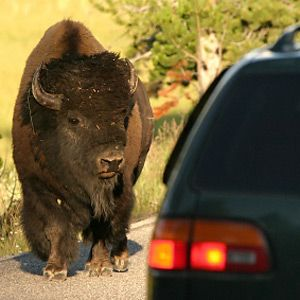 Best Cars To Take On Roadtrips To National Parks