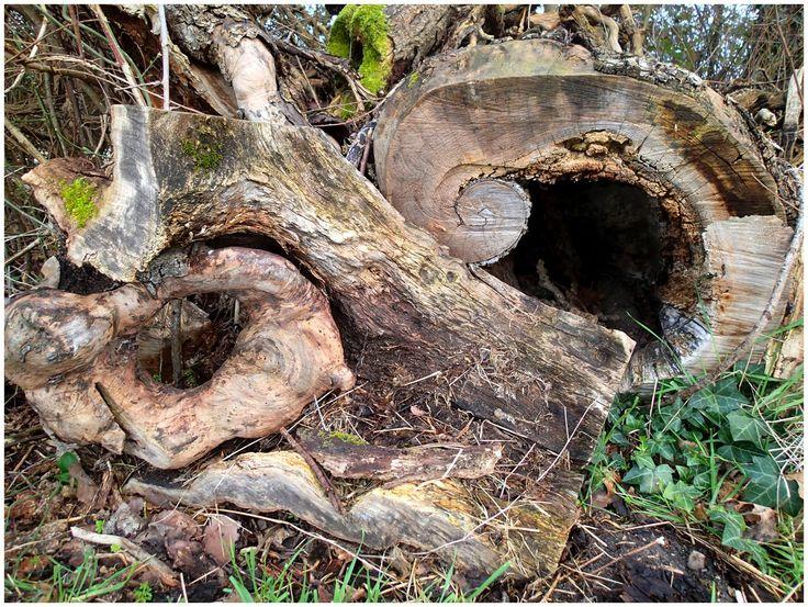 Les insectes xylophages viendront se loger dans les vieilles souches car ils sont friands du bois mort (non traité, de préférence) qui se décompose.