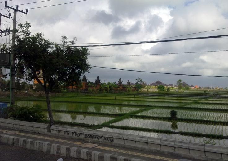 Sawah Badung, Bali-2011