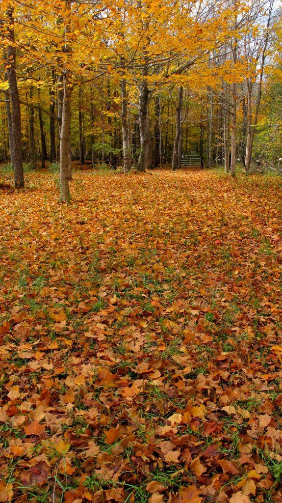 Glorious autumn colours on the Elgin Trail, St. Thomas, Ontario. #autumncolours #fall #elgintrail