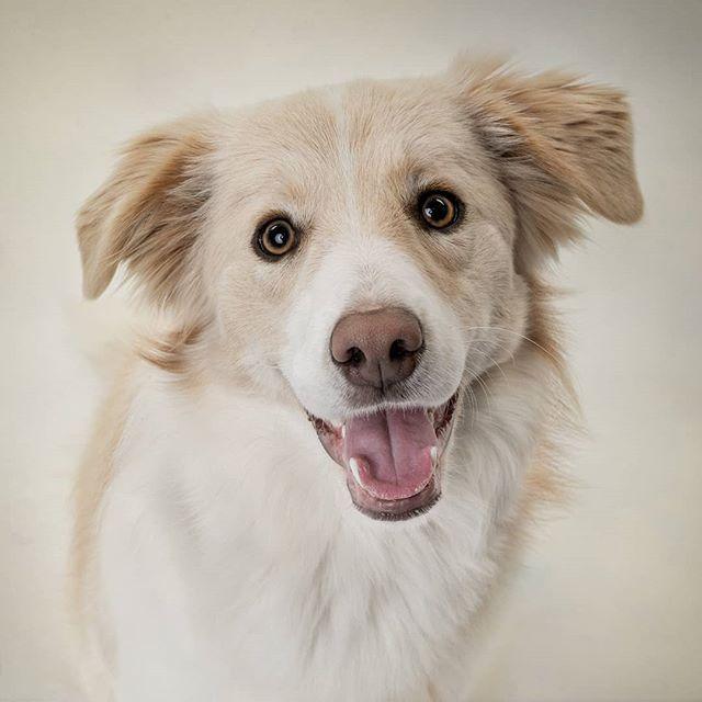 Pin On Fr Og Dog Studios Pet Photography
