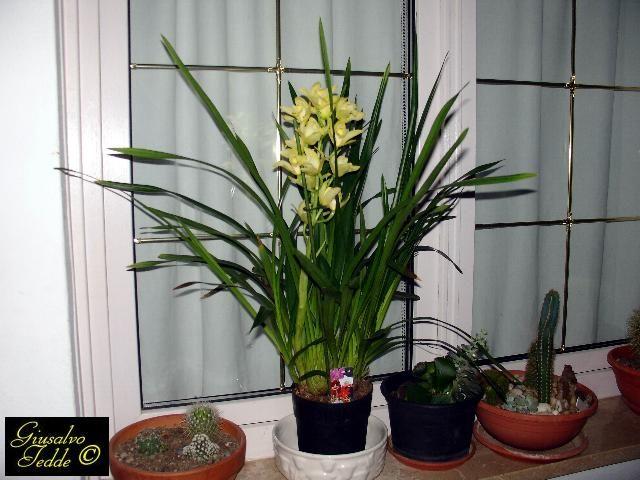 17 migliori idee su piante da appartamento su pinterest - Orchidee da esterno ...