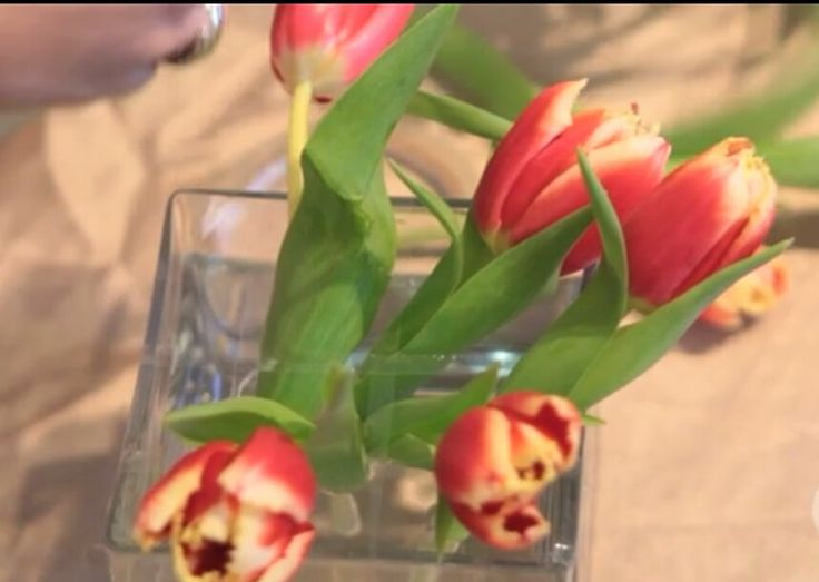 http://tiphero.com/how-to-arrange-flowers-like-a-pro-in-1-minute/