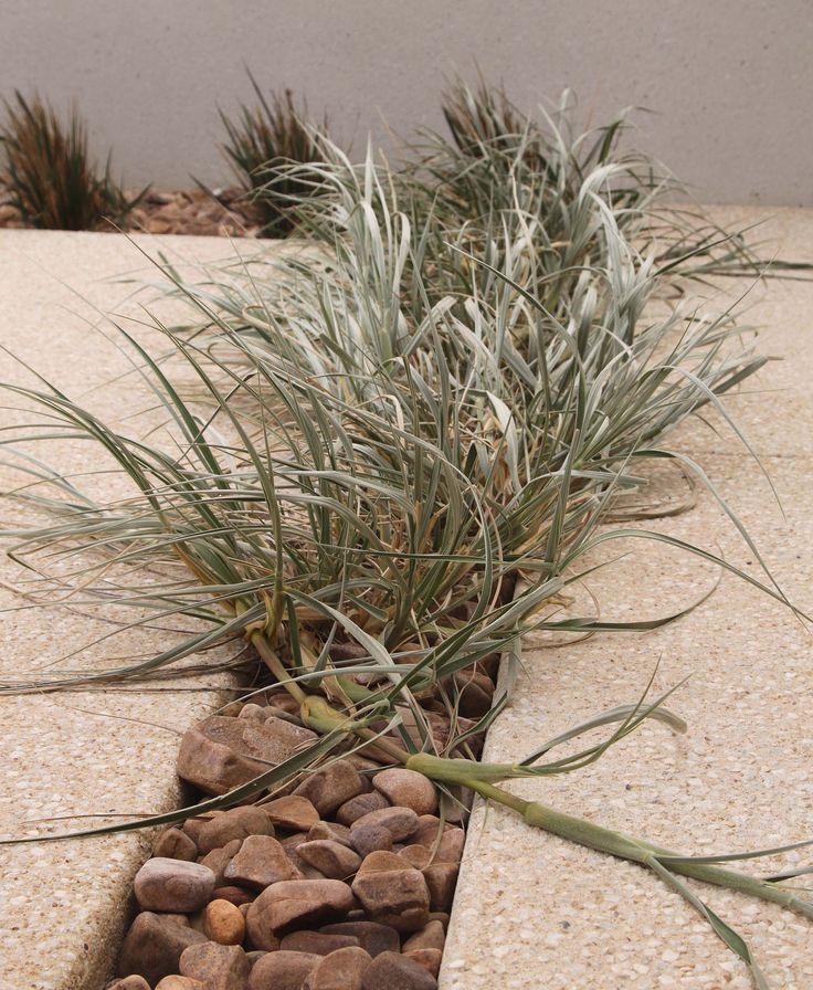 Tennyson residence - drought tolerant indigenous plants.