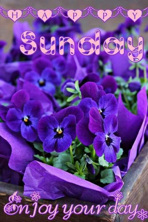 Resultado de imagen para great Sunday violet flowers