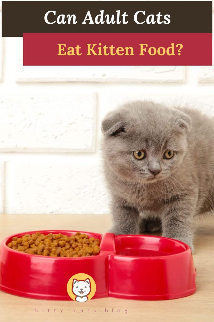Kitten Feeding Schedule How Much To Feed Your Growing Kitten Newborn Kittens Baby Cats Kittens