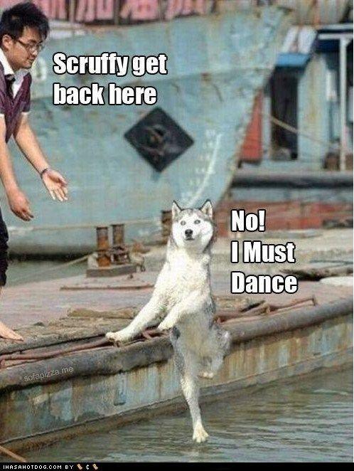 Scruffy: Moonmoon, Funny Dogs, Giggles, Funny Stuff, Funny Animal, So Funny, Moon Moon, Dance, Sofunny