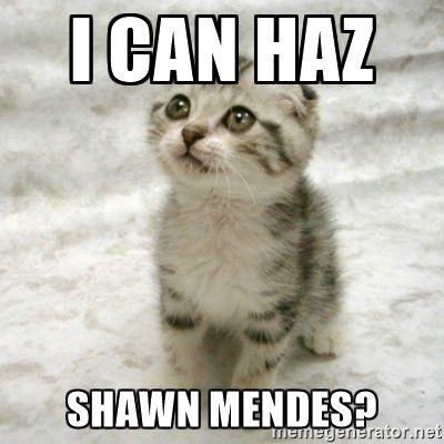 I can haz Shawn Mendes? - Can haz cat | Meme Generator