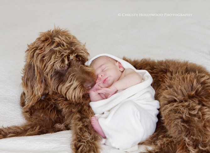 newborn and dog pictures, newborn with dog session - Christy Hollywood is a Newborn Baby and Child Photographer Greenville SC and Charlotte NC