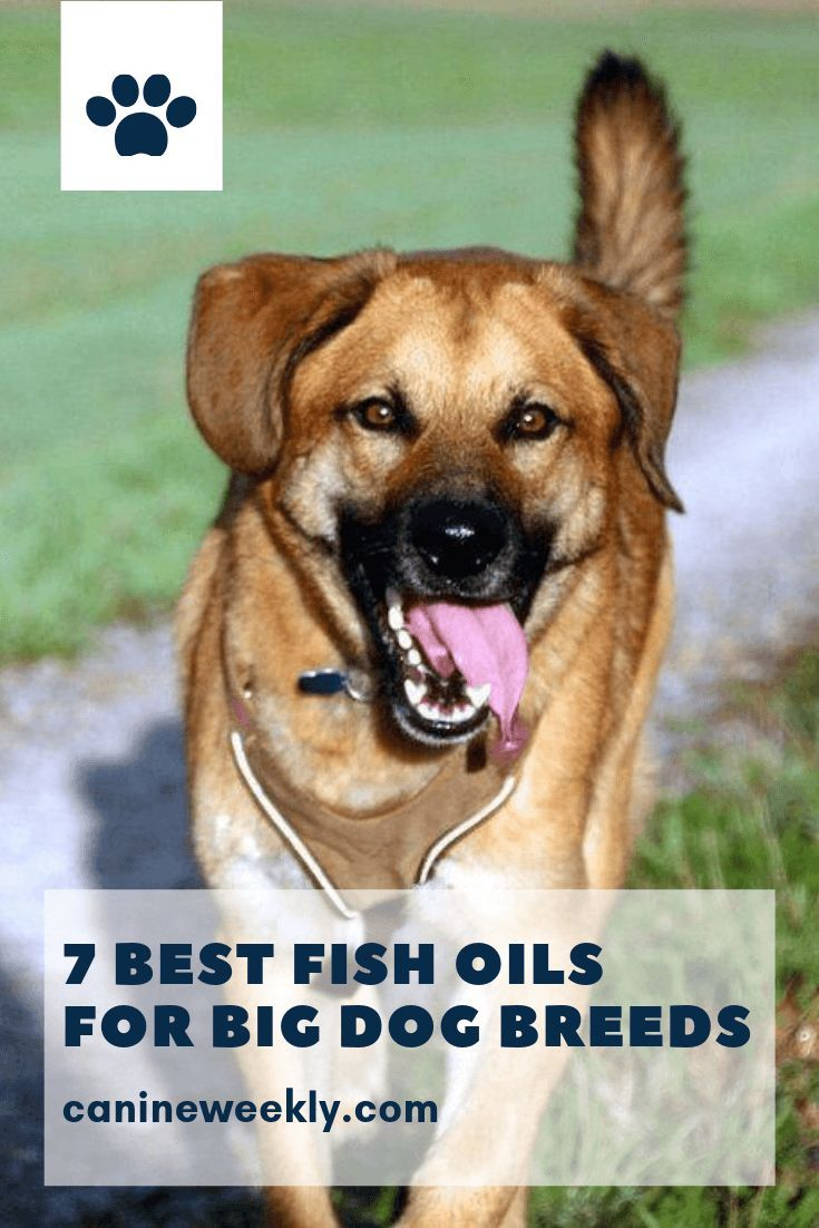 7 Best Fish Oil For Dogs In 2020 Top Omega 3 Supplements Best Fish Oil Oils For Dogs Fish Oil