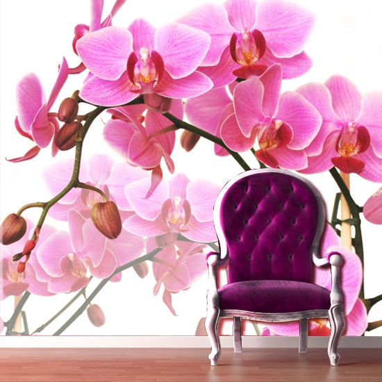 Orchids are perfect for any home, even yours.