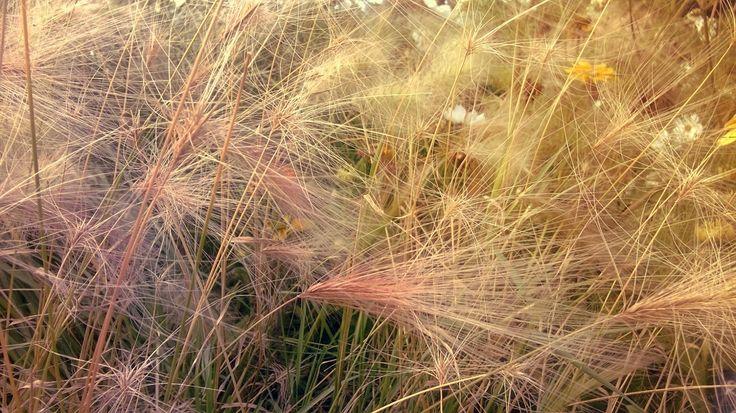 Meadow and sunshine.