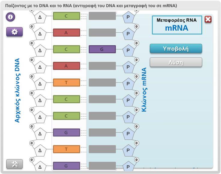 """Online δραστηριότητες αυτοκατευθυνόμενης μάθησης και ιστοεξερεύνησης.  """"Μαθαίνοντας για την αντιγραφή του DNA και την μεταγραφή του σε mRNA"""""""