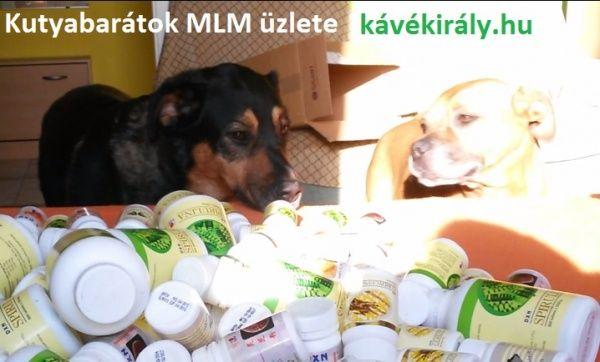 Kutyabarátok kávés MLM  üzlete [Pepita Hirdető]