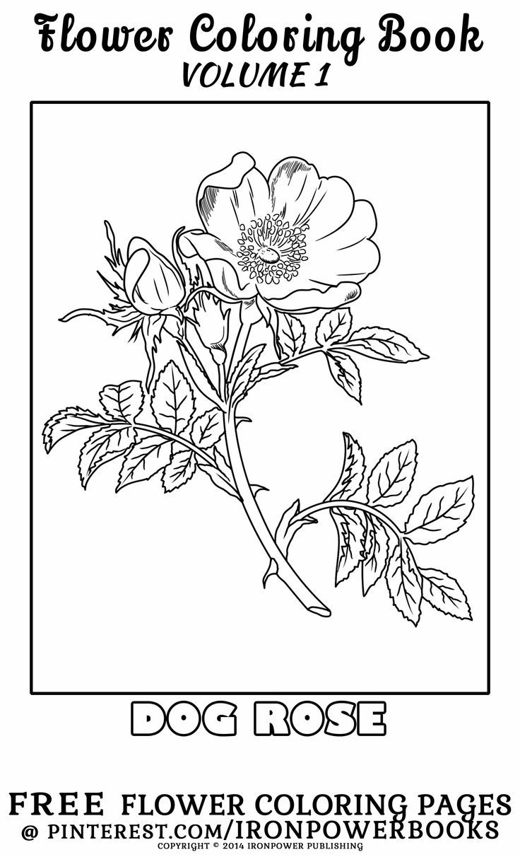 Flowers Coloring Pages For Adults Embroidery Flowers Coloring