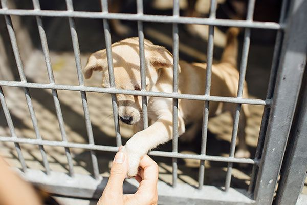 Photo Diary: A Day at the Shelter with Wags and Walks | Lauren Conrad