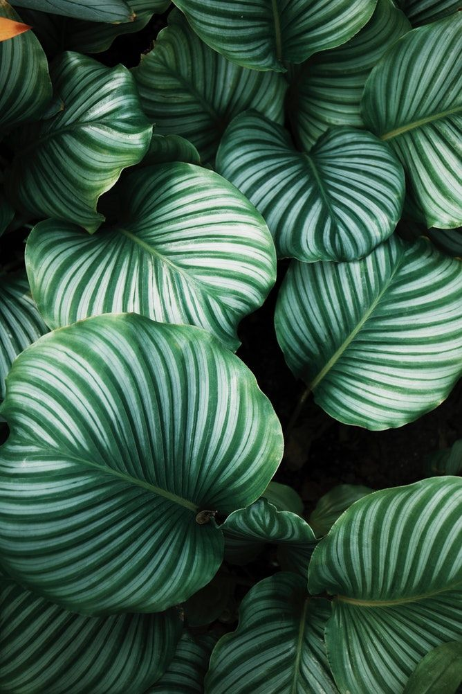 Green And White Leafed Plants Plant Leaves Big Leaf Plants