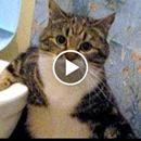 LAUGH LIKE YOU'VE NEVER LAUGHED BEFORE - Funny ANIMAL compilation