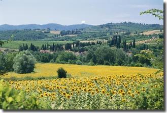 Fields of sun flowers.