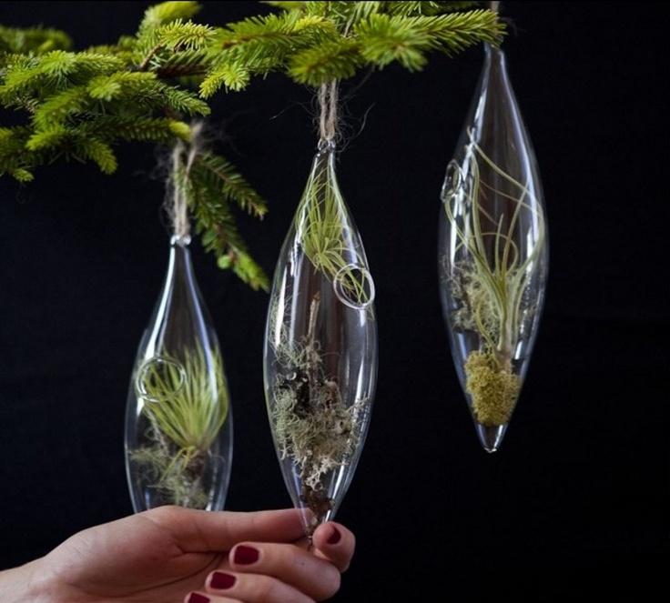 17 best images about decorar con plantas on pinterest - Plantas d interior ...