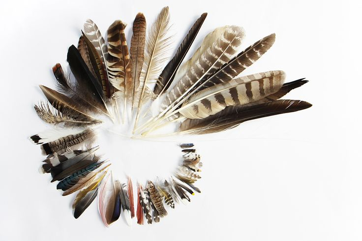 left behind | the feathers i can confidently identify include: egret, canada goose, bald eagle, wild turkey, barred owl, pheasant, crow, gull, ruffed grouse, pigeon, blue jay, yellow shafted flicker, flamingo, mallard, cardinal, woodpecker, junco, cedar wax wing