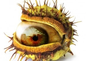 Eye, eye...