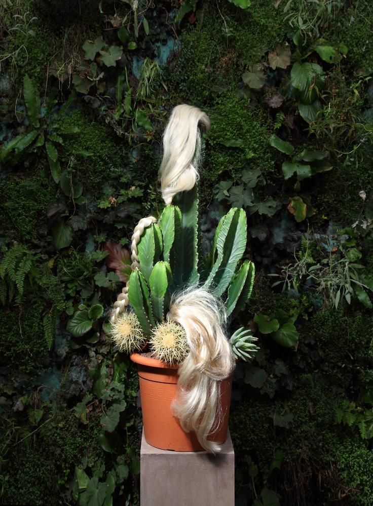 Wyne Veen: Cactus Team, Art Blog, Absolutely Art, Plants Natural, Art Direction, Wyne Veen, Plants Hair, Hair Wyneveen Com, Cactus Succulenti