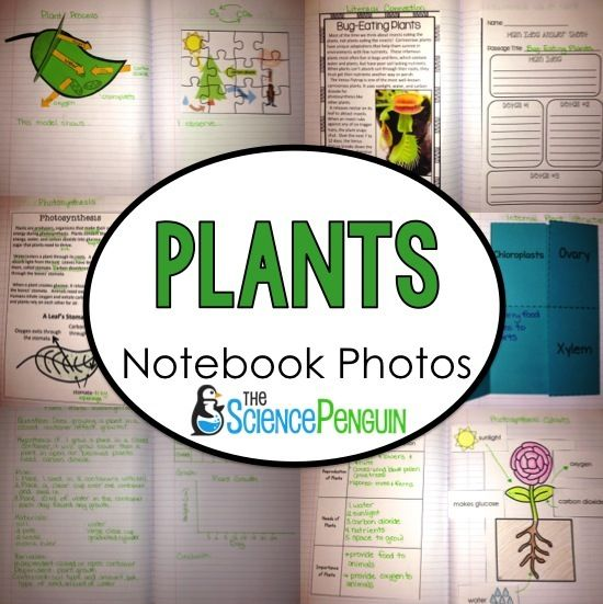 Teaching plants and photosynthesis to your students? Try these fun ideas for science notebooks.