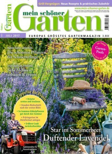 Fabulous Star im Sommerbeet Duftender Lavendel Jetzt in Mein sch ner Garten