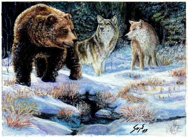 Bear and wolves