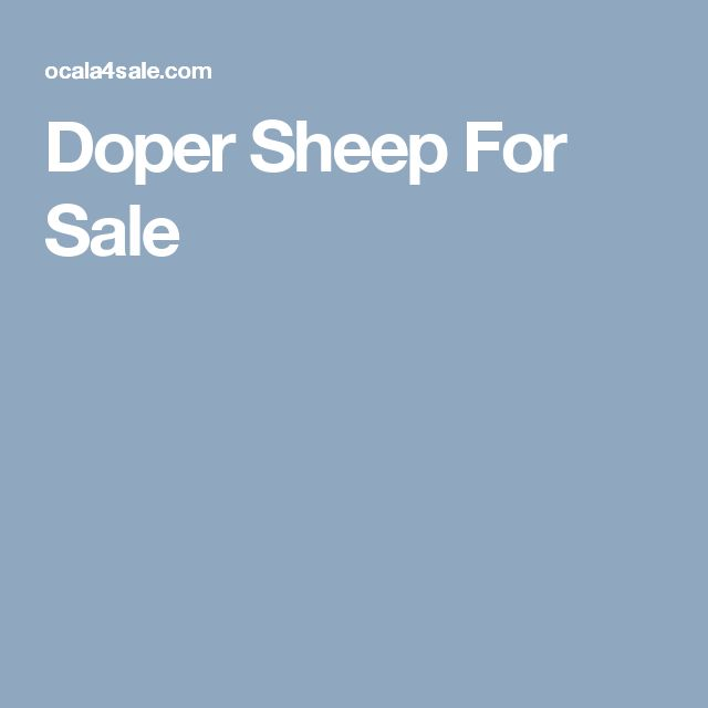 Doper Sheep For Sale