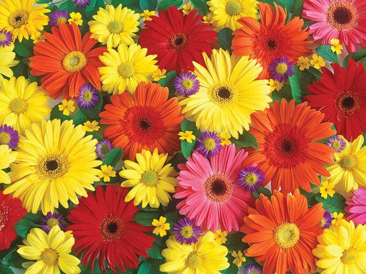 44 Best Images About Puzzle Images On Pinterest John