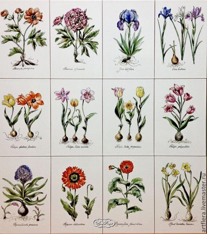 """Ботанические гравюры"""" - разноцветный, ботаническая иллюстрация, ботанический рисунок, ботаника"""