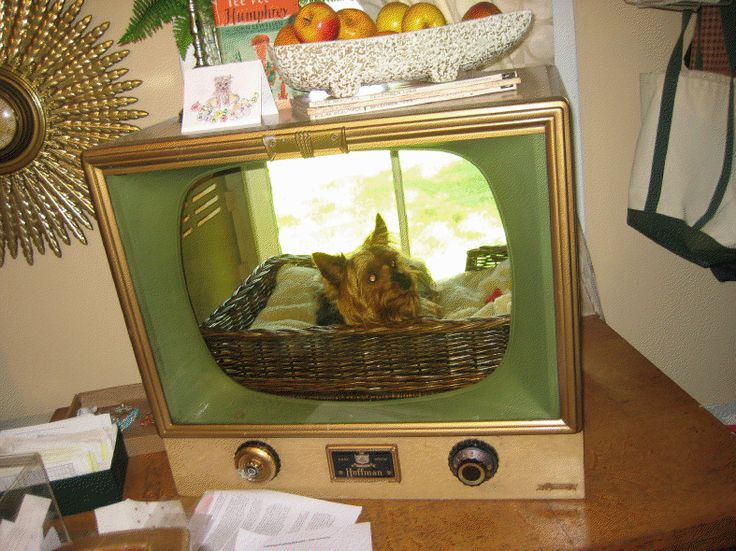 best 25 tv dog beds ideas on pinterest old tv consoles s box tv stands and super crate box. Black Bedroom Furniture Sets. Home Design Ideas