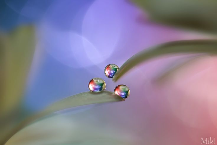 Today we came across the beautiful work of Japanese photographer Miki Asai and just had to share some of it with you. Miki says she's 'trying to show the beautiful world of the small' – and she is certainly successful! Beauty lasts forever by Miki Asai on 500px The combination of delicate colour, composition and …