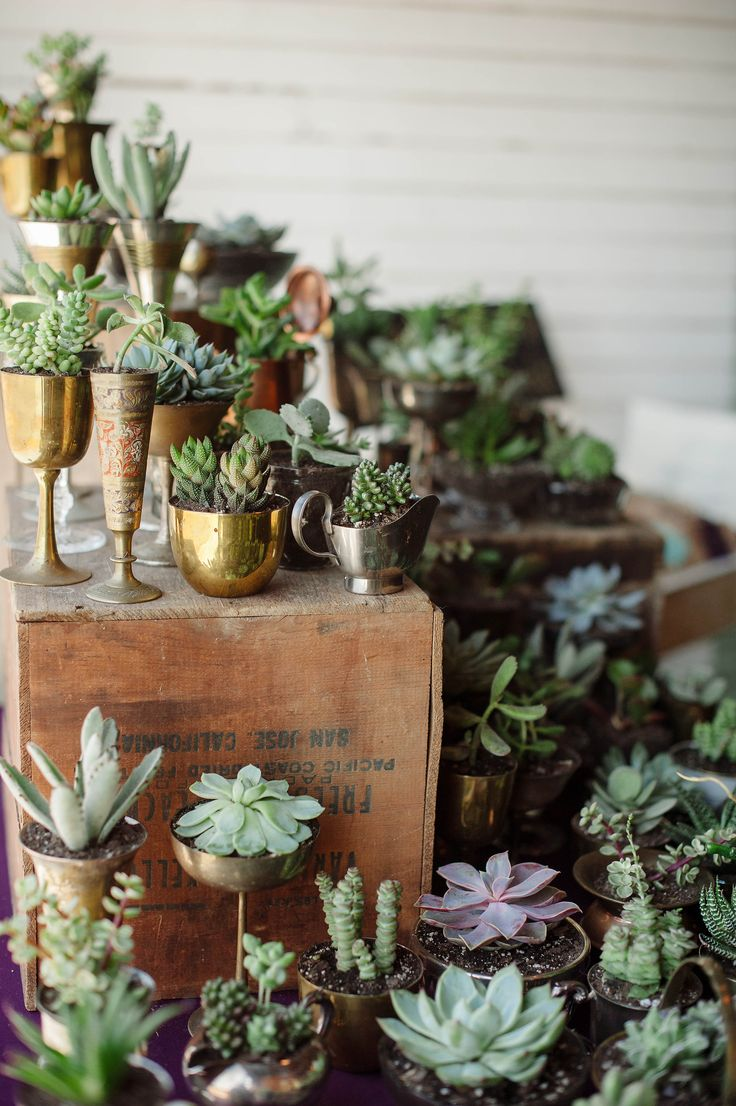 Succulent Wedding Favors www.TheStandardKnoxville.com Photo by http://jennieandrewsphoto.com/ The Standard Knoxville | Weddings, Receptions, Galas & Parties