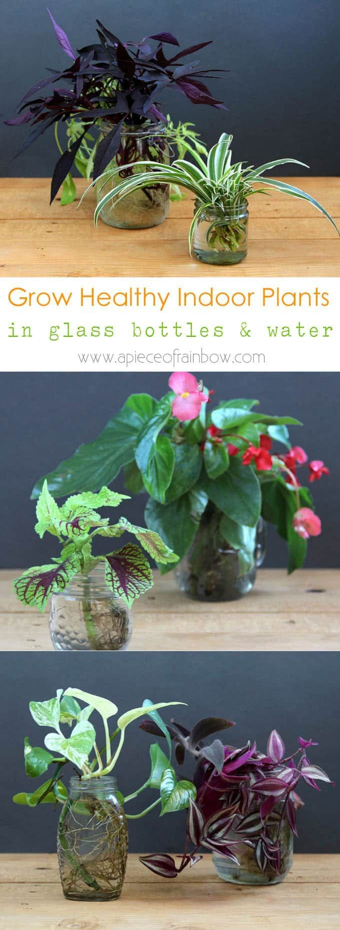 grow-indoor-plants-in-glass-bottles-apieceofrainbow (3) - begonia, spider plant, wandering jew, pothos, sweet potato vine, coleus