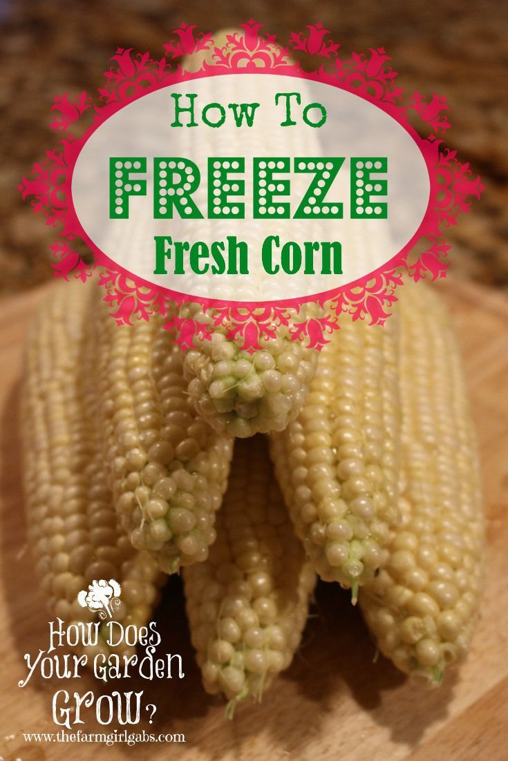 How To Freeze Fresh Corn from How Does Your Garden Grow? ~ www.thefarmgirlgabs.com