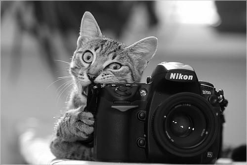 美しい、黒と白、カメラ、猫