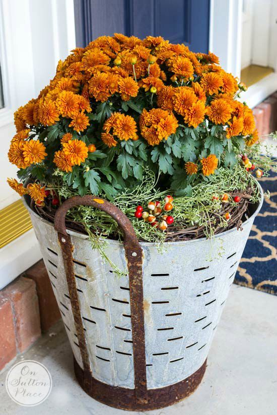 brands clothes online Fall Mums in Olive Buckets   Easy  DIY way to add a touch of vintage charm to your Fall porch decor  Includes photos on how to assemble