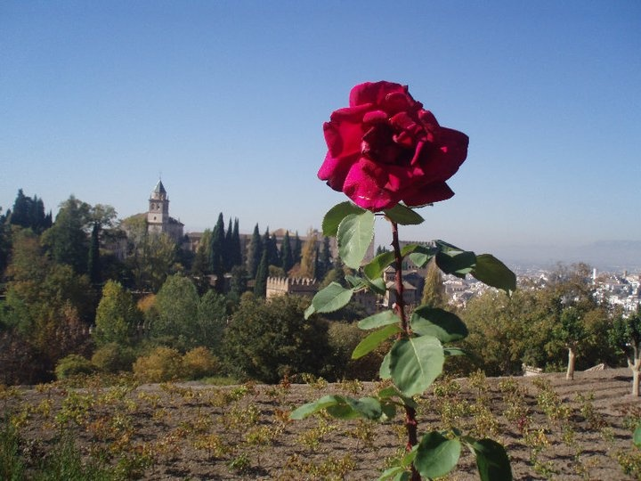 Castle in Granada, Spain.  I took this picture in about 2009.