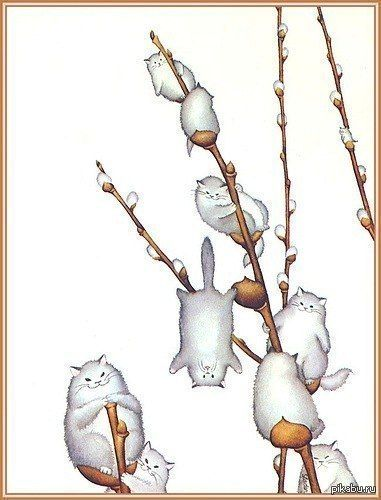 033015 ~ 041214 ~ 1st pussy willows ~Pussy Willows...so funny, they are really pussy cats!.
