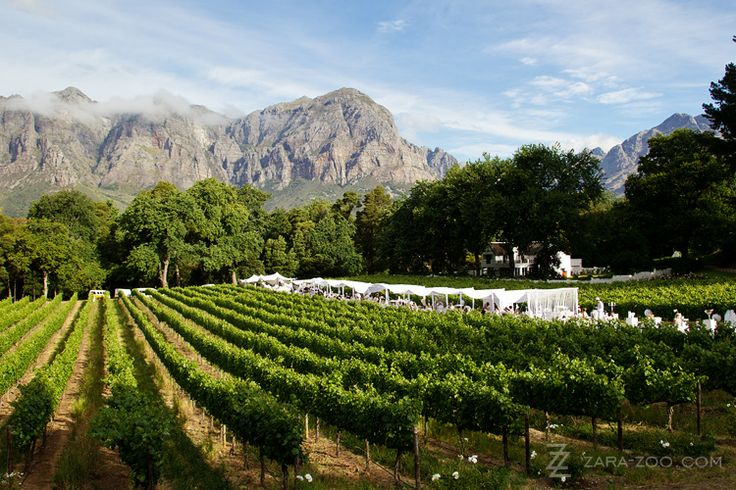 Panoramic photo of an event at Molenvliet Wine and Guest Estate in #Stellenbosch. Molenvliet is one of the top 10 #weddingvenues in #CapeTown.  Read our full venue review on the ZaraZoo Blog http://www.zara-zoo.com/blog/molenvliet-venue-review/