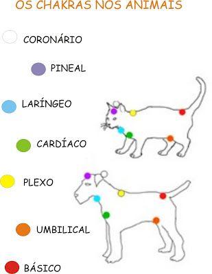 TAROT DE ESTHER: Τα CHAKRAS των ζώων
