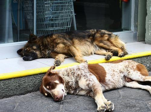 """Hoy viernes 27 de julio se conmemora en todo Chile el """"día del perro callejero"""""""