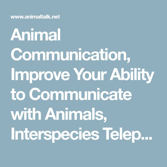 what can humans learn from the interpersonal communications of animals Dog communication with humans from your dog trainer andrew ledford 714-827-4058 is dog communication with humans possible learn to communicate with your dog in a way the dog was created to understand.